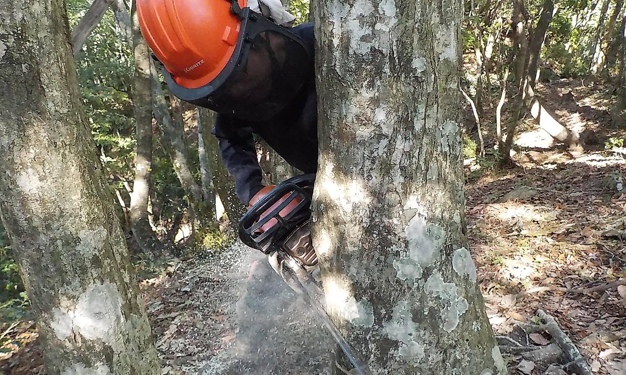 有限会社 坂東林業