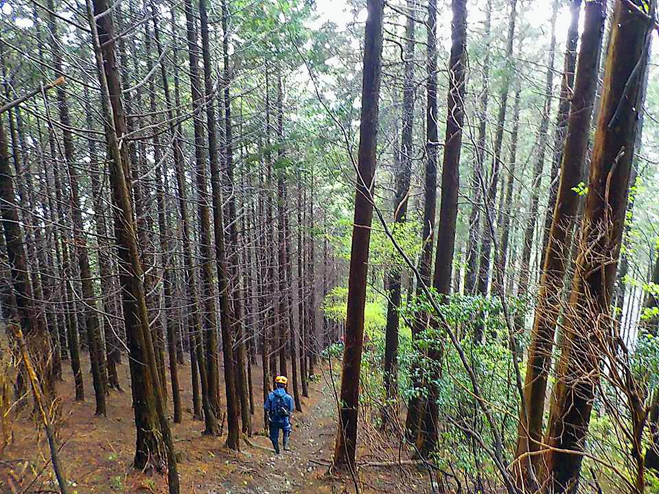 里山林整備、魚つき林整備、環境林整備等、林道・作業道開設、補修